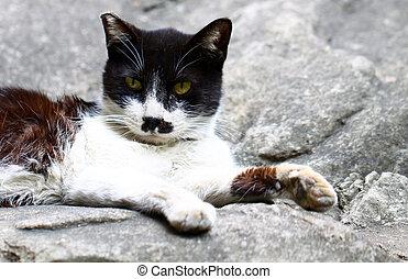 A cat sitting on rocks