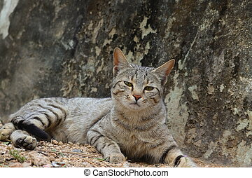 A cat sitting on the ground looking at the camera