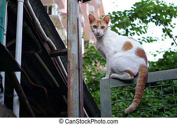 A cat staring at people, sitting on the gate. - It is ...