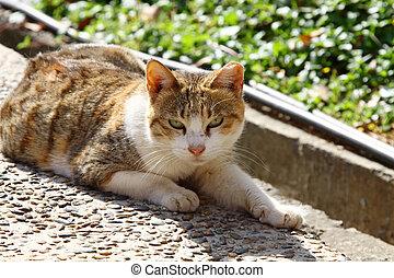 A cat under sunshine