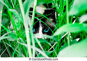 cat with blue eyes sitting in green grass