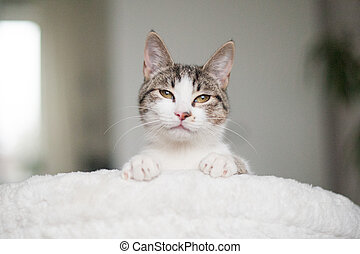 A cat with cunning eyes on a white armchair