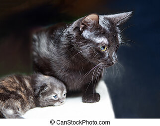 A cat with kitten.