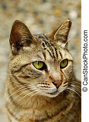 A cat with sharp eyesight, close-up.