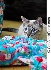 A cats' vibrant blue eyes match christmas wrapping paper