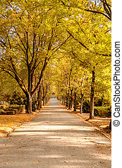 a cemetry avenue in autumn with trees withs yellow leafs