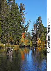 Autumn forest and blue sky reflected in water