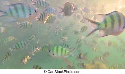 A child bathes in the sea with a fish in the sun. Scuba diving in masks. Tropical island. Sunlight through the water