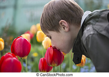 A child sniffs flowers. The boy near the tulips. The smell of spring flowers