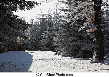 A Christmas Day. Snowy cozy ski hotel - A lovely sunny...