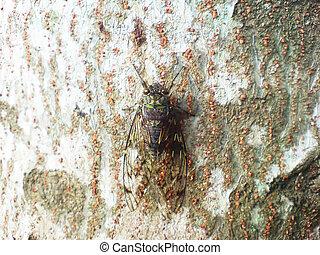 A Cicada On A Tree
