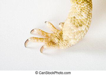 a claw