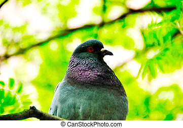 a close up of a dove in green grass