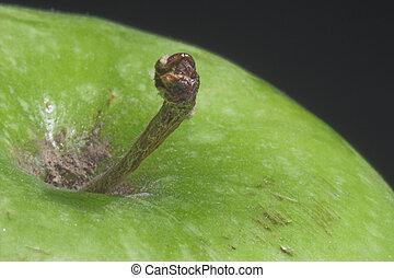 Granny Smith Apple - A close-up of a Granny Smith Apple.