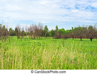 A close up of a green field with trees