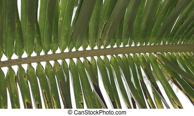 A close-up of a green palm leaf