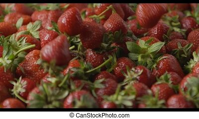 A close-up of a red ripe juicy strawberry slow falls by a group on a tray with berries. Berries background. Slow motion video. Soft focus. Full HD video, 240fps,1080p