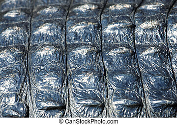 Close up of an alligator back