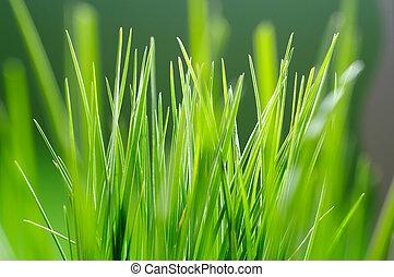 a close up of fresh green grass