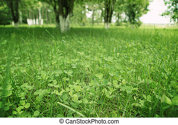 A close-up of green grass and clover leaves on a clearing