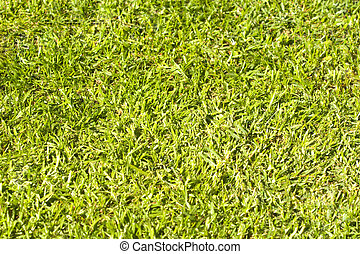 A close up of green grass