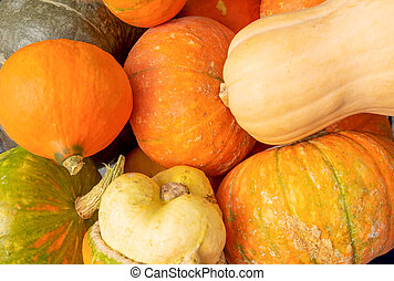 A close-up of several ripe beautiful pumpkins.