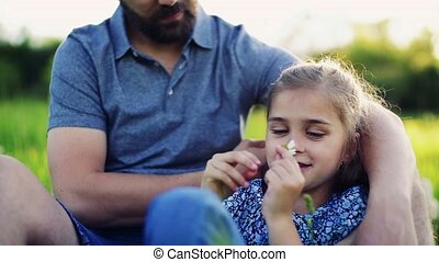 A close-up of small girl with her father picking petals off...