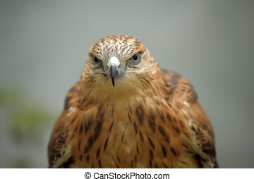 A close up of the head of falcon