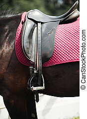 A close up of the side of a horse during a dressage movement shot