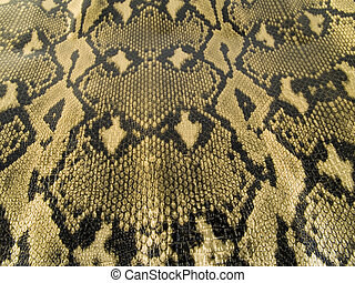 snake skin - a close up on a snake skin texture.