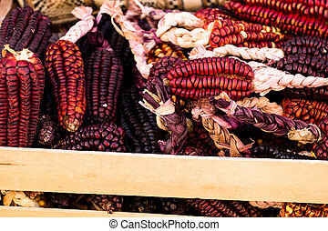 A Close up or Cheerful and Colorful dried Indian Corn