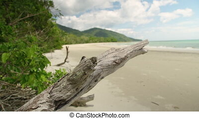 A close up shot of a branch on shore
