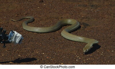 A close up shot of a camera man filming a snake