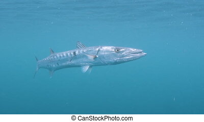 A close up shot of a fish