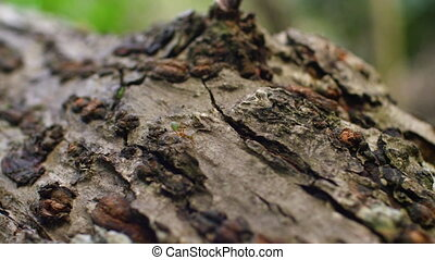 A close up shot of a tree bark with an ant - A macro shot of...