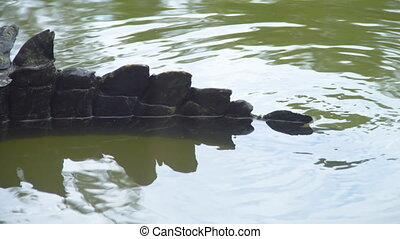 A close up shot of alligator's tail - A close up panning...