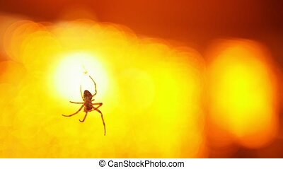 A close up shot of little spider flying in the air - orange...