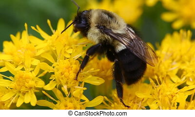 Close up view of a bee on a flower