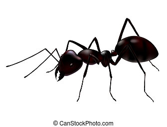 a close up view of a vector ant isolated on white