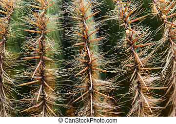 a close-up view of cactus