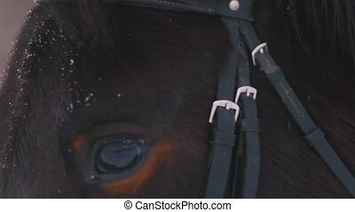 A close up view of the eye of a brown horse at snowy weather
