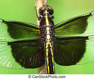 A closeup of a dragonfly on a branch in the woods using a shallow depth of field and selective focus