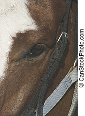 A closeup of a horse\'s eye