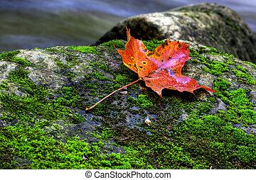 A closeup of an orange maple leaf in a stream in autumn
