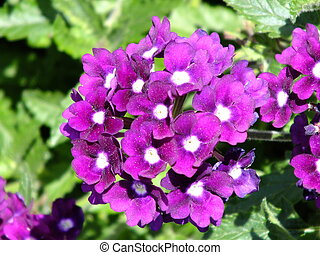 A cluster of purple flowers