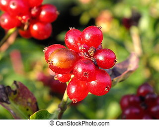 A cluster of red berries
