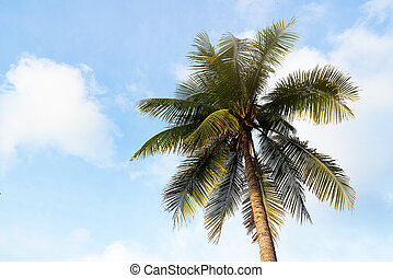 A coconut tree on blue sky background