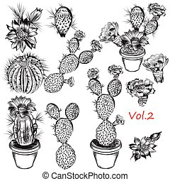A collection of careffully hand drawn cactuses in engraved style for design