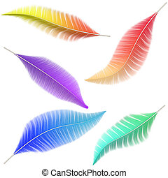 A collection of colored feathers of birds