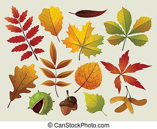 A collection of colorful autumn leaf designes.